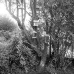 Fuglene bor i hagen.
